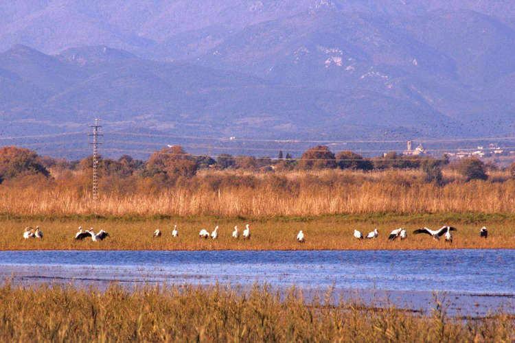 Many storks