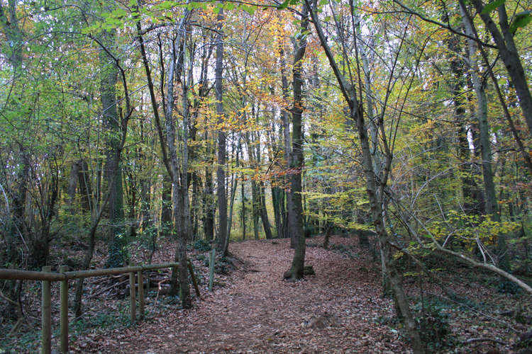 La Fageda - In the woods near the volcanoes