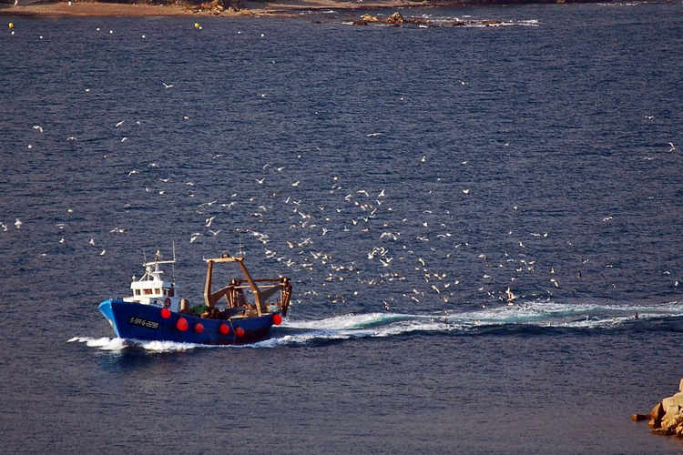Fishing boat arriving to the port
