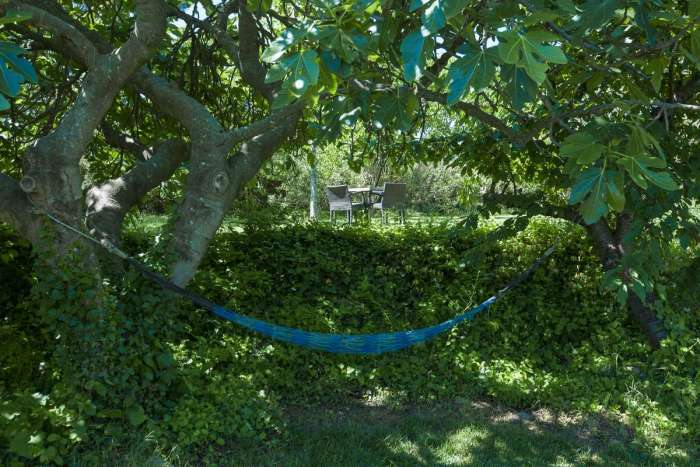 There is a fig tree in the garden