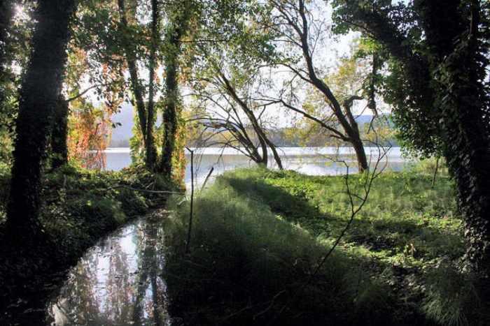 El llac dels boscos