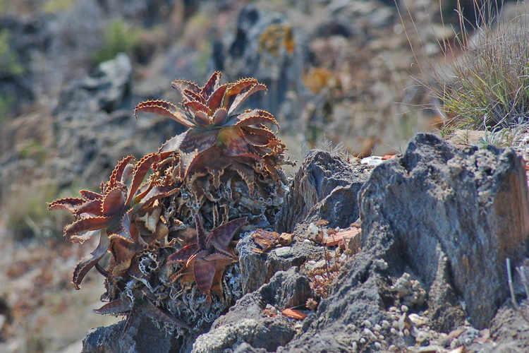 Cactus - aquí només els forts sobreviuen