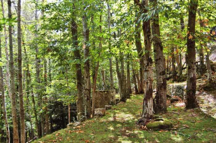 El bosc prop de Requesens