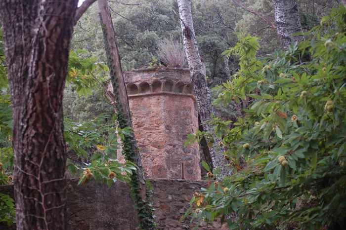 Una ruïna al bosc